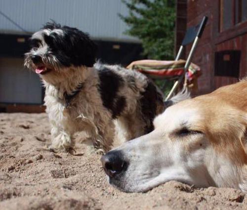 Tibu & Vito